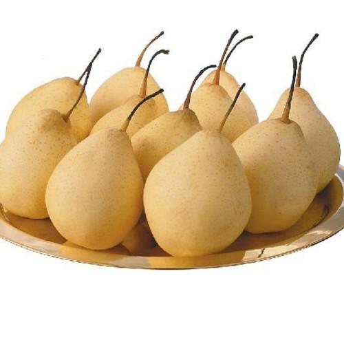 富光果业有限公司  专业种植各种水果 果树销售  晚秋黄梨 砀山梨-- 鄢陵县富光果业有限公司
