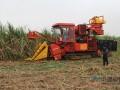 廣西甘蔗生產加快推進全程機械化