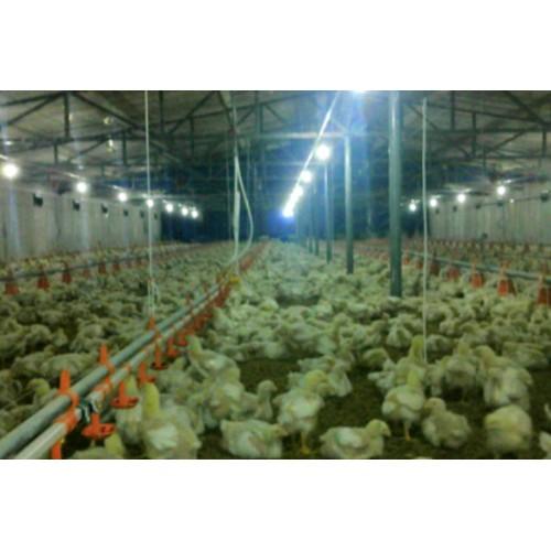 保温板鸡舍-- 绿之源新型保温板设备有限公司