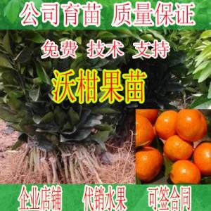贵州哪里有沃柑果苗培育批发基地