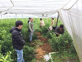 云南哪里有沙糖桔苗买-- 柳州市鑫鑫农业科技有限公司
