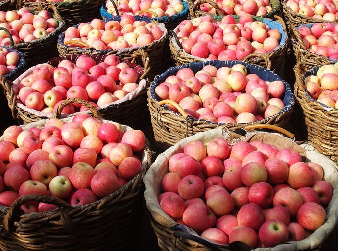 山东红富士苹果价格膜袋苹果-- 山东红富士苹果产地