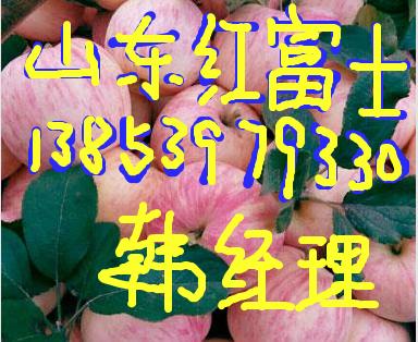 山东苹果价格膜袋红富士苹果价格-- 山东红富士苹果产地