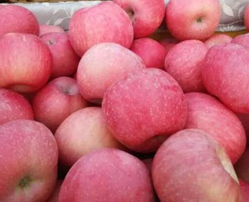 山东冷库红富士苹果-- 山东红富士苹果产地