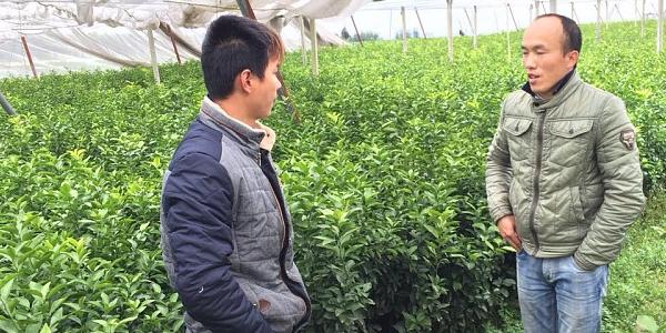 兴义哪里有鹿寨无核蜜橙苗卖-- 柳州市绿盛农业科技有限公司