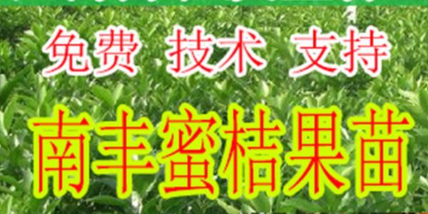 兴义哪里有南丰蜜桔种苗批发-- 柳州市绿盛农业科技有限公司