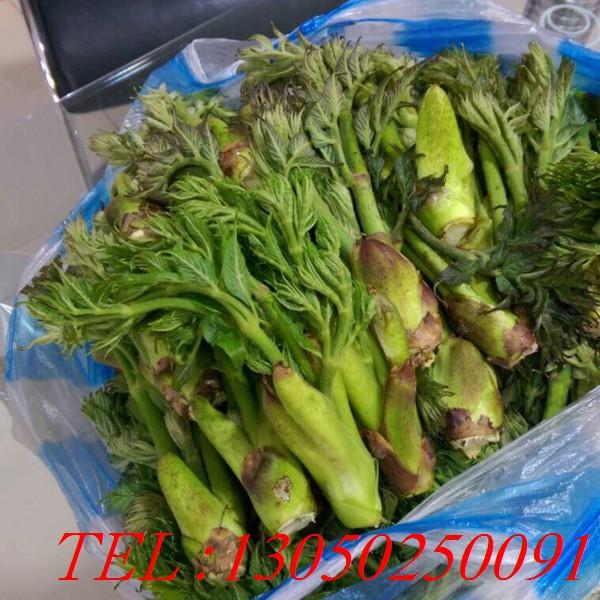 遼寧刺嫩芽苗、刺嫩芽苗供應商、刺嫩芽苗批發-- 桓仁瑞林苗圃