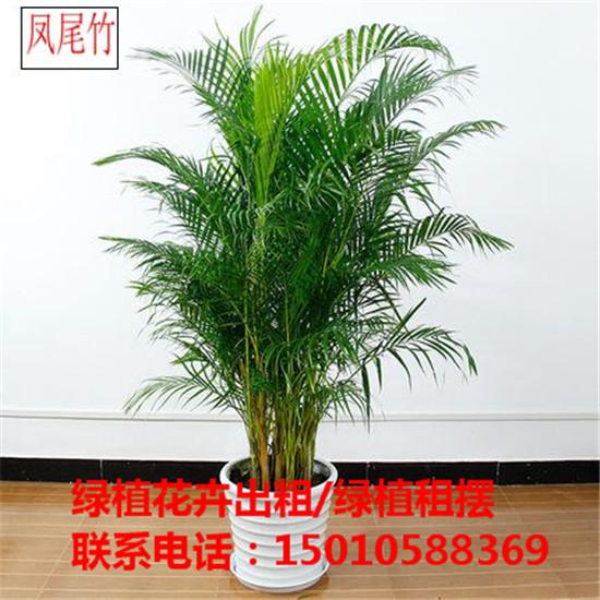 北京绿植花卉盆栽租赁价格 北京绿植花卉盆栽摆租公司-- 北京优质绿植花卉盆栽租赁公司