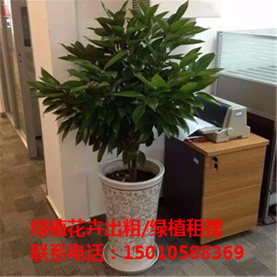 北京优质花卉绿植盆景租赁公司 北京专业花卉绿植盆景租赁公司-- 北京花卉绿植盆景摆租公司