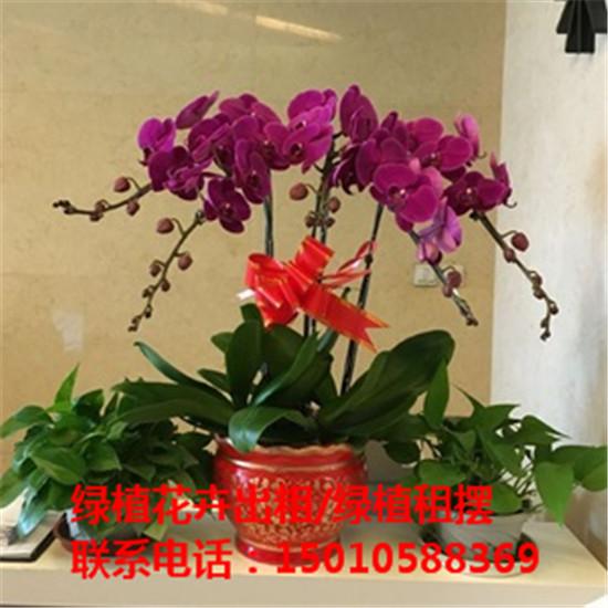 北京绿植花木盆栽租赁供应商 北京绿植花木盆栽租赁公司-- 北京花木绿植盆栽出租公司