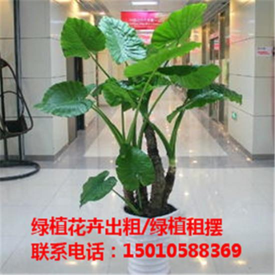 北京水培绿植花卉租赁公司 北京水培绿植花卉租赁供应商-- 北京花木绿植盆栽出租公司