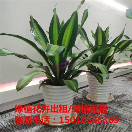 北京中型绿植花卉租摆公司 北京中型绿植花卉租摆供应商-- 北京花木绿植盆栽出租公司