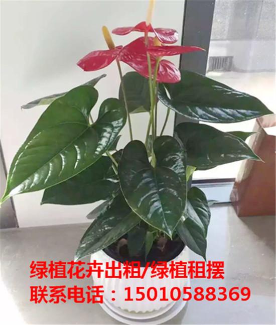 北京小型绿植花卉租摆公司 北京小型绿植花卉租摆供应商-- 北京花木绿植盆栽出租公司
