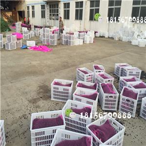 安徽凤丹种子批发基地 亳州凤丹种子育苗场-- 亳州市谯城区绿尚种植专业合作社