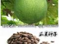 瓜蒌种子 (1)