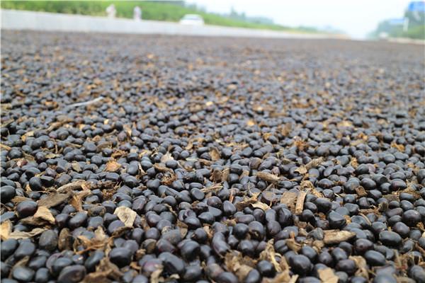 菏泽牡丹种子种植基地 菏泽牡丹种子苗木基地-- 菏泽市盛浩花木有限公司