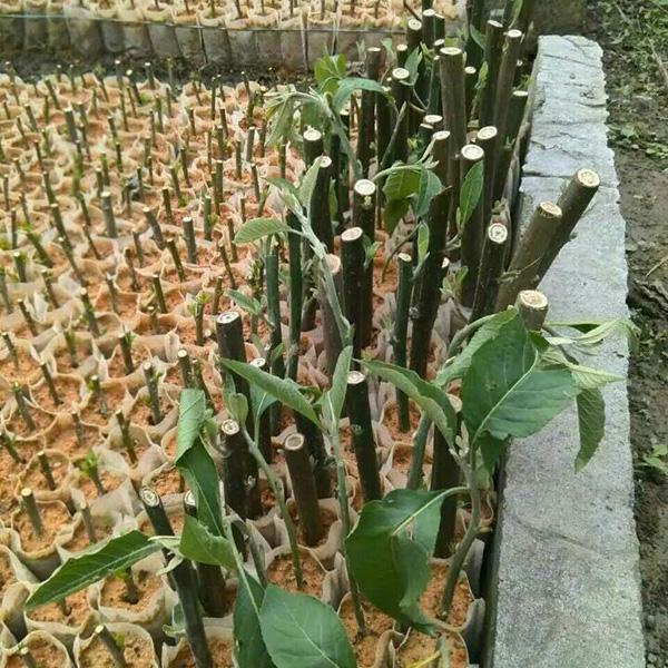 无纺布育苗袋-- 中山市横栏镇云丽植树袋加工店