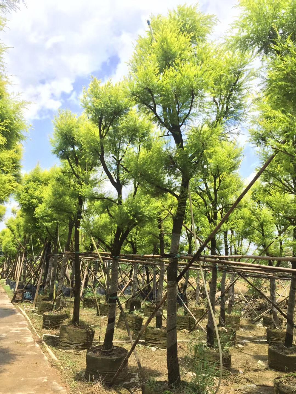 无纺布植树袋-- 中山市横栏镇云丽植树袋加工店