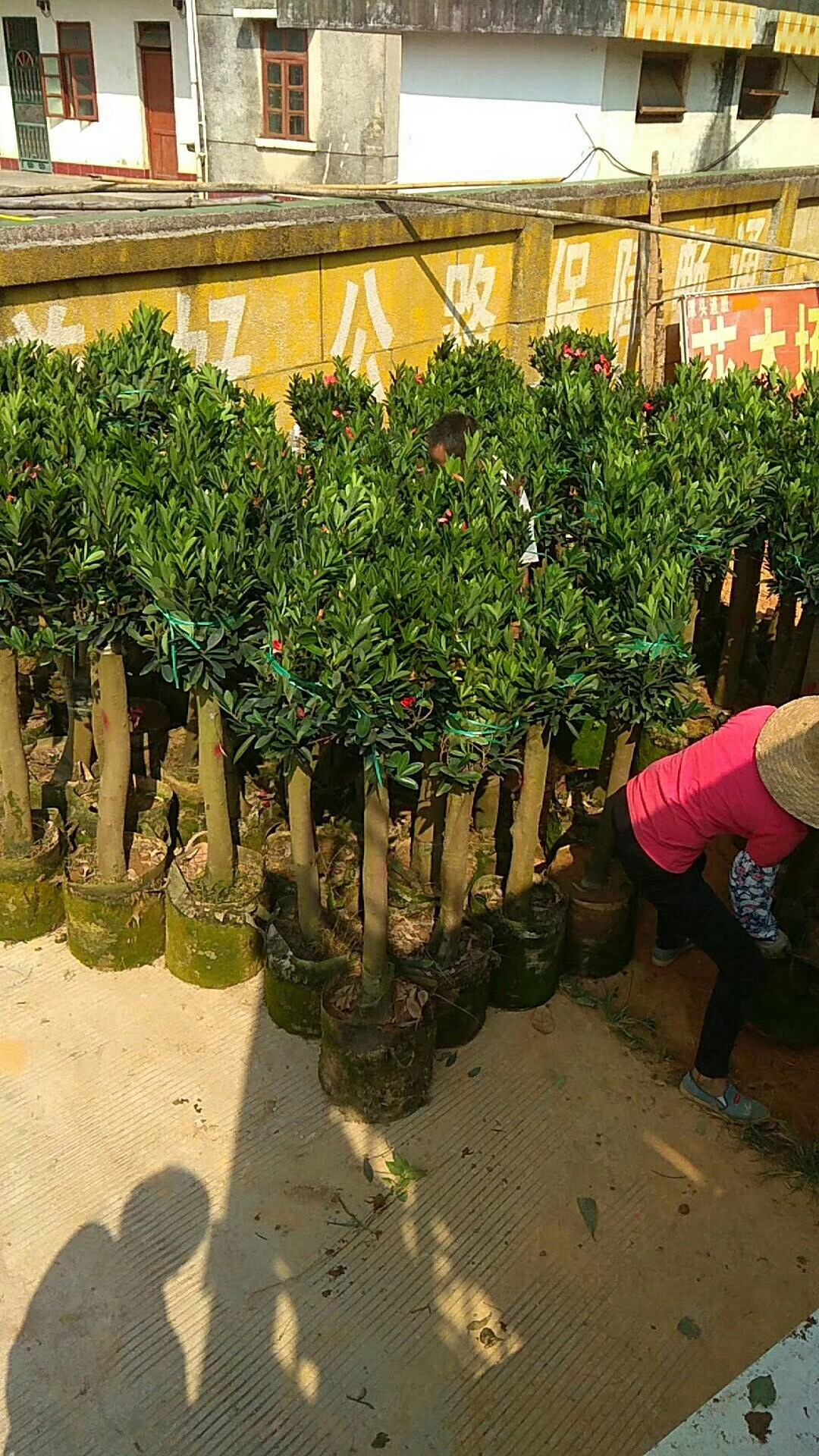 環保植樹袋-- 中山市橫欄鎮云麗植樹袋加工店