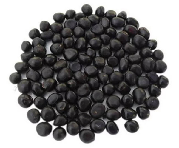 牡丹籽价格-- 甘肃禾邦生态农林科技开发有限公司