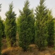 安徽常森园林绿化工程有限公司
