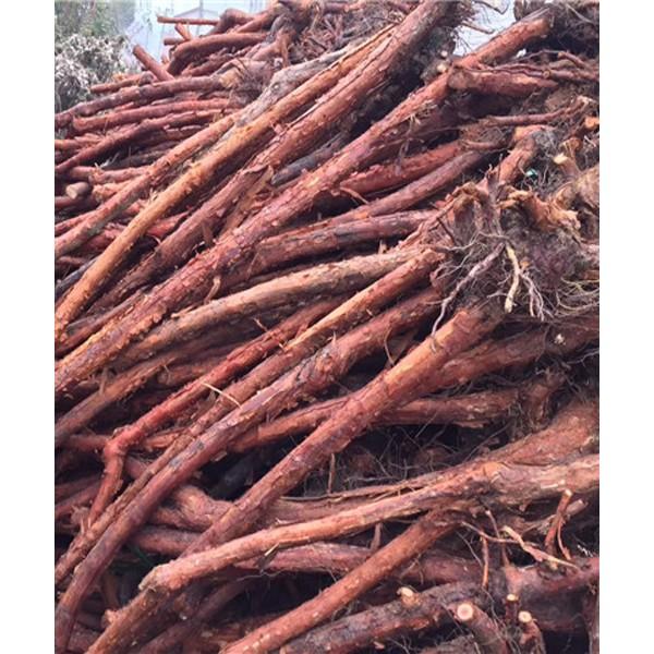山木香下山桩-- 陕西汉中远大苗木场