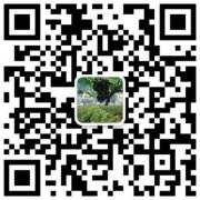 红岐苗木|户太八号葡萄苗基地、核