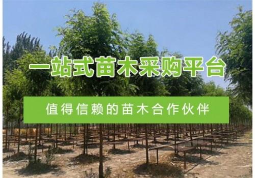 安徽格瑞恩园林工程责任有限公司